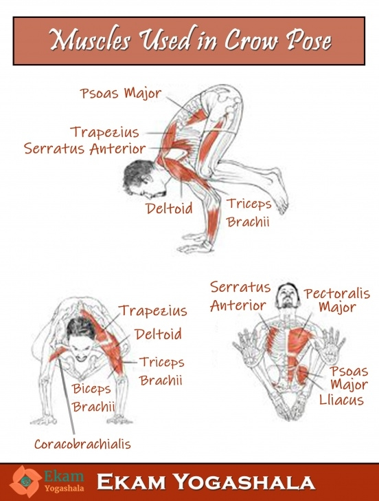 basic yoga poses muscles used picture