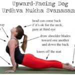 Best Yoga Poses Benefits Of Upward Facing Dog Photos
