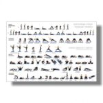 Best Yoga Positions Poster Picture
