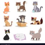 Easy Cute Cat Poses Photos