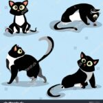 Easy Cute Cat Poses Pictures