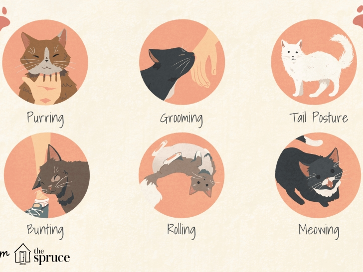 most important cat sleeping positions meaning image